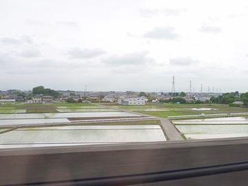 関東の水田