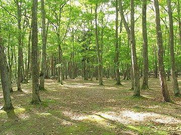 自然風に見えますが、純粋な自然林は、決してこんな景観にはなりません