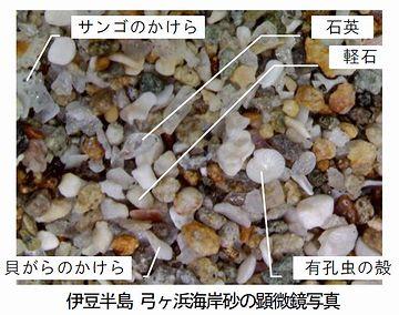 これは砂粒よ