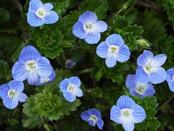 小さくて可憐な花です