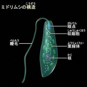 そんなことが出来るのは、単細胞生物だけだわ