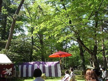 千秋公園・夏は、葉緑