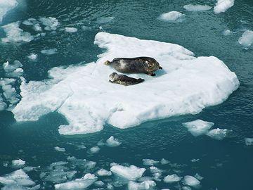つまり、氷が溶けて海水面が高くなってた