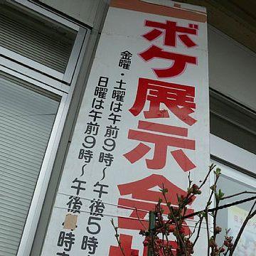新潟県では毎春、日本ボケ協会主催の『日本ボケ展』が開催されます