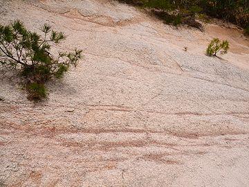 一見、岩盤に見えますが、触っただけでグズグズに崩れます