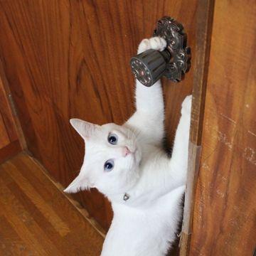 ドアノブが付いてるのに、何で横に引くのよ!