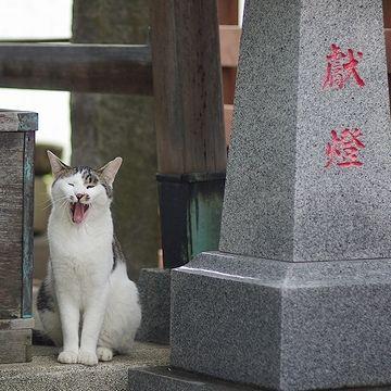 『谷根千』は、猫の街としても有名なんですね