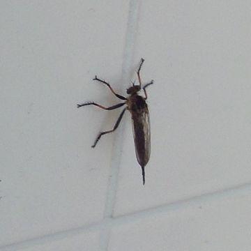 タイルに、何かの虫がいました