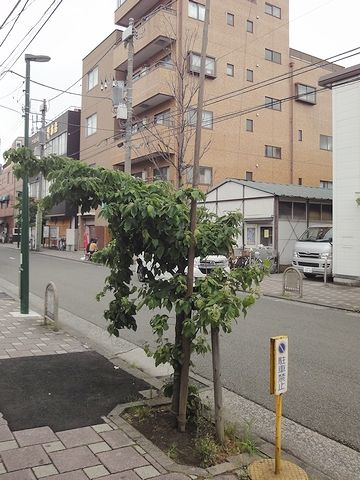 哀れな街路樹