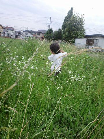 もちろん、草ぼうぼうです