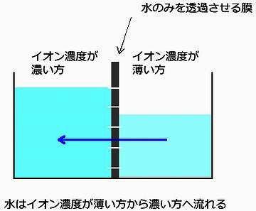 浸透圧により水分を吸収