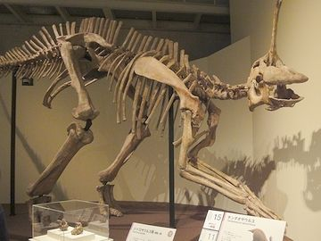 恐竜界のお笑い芸人