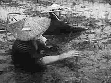 亀田郷での田植えの様子。過酷極まりない作業でした。