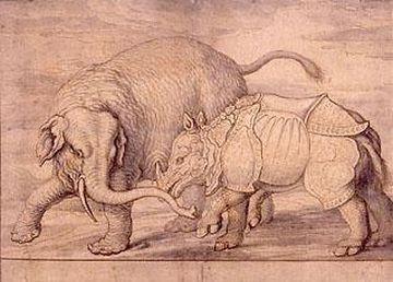陸上動物では、確か、象に次ぐ大きさですよね