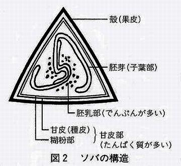 蕎麦の実の構造図