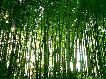 敷地の中に、子供なら迷いそうな竹林があった