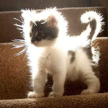 大変なことになってるネコ。静電気だそうです。