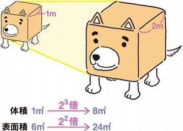 体長の3乗が体重であり、体長の2乗が体表面積です