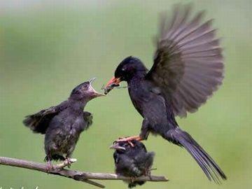 鳥の世界も不公平
