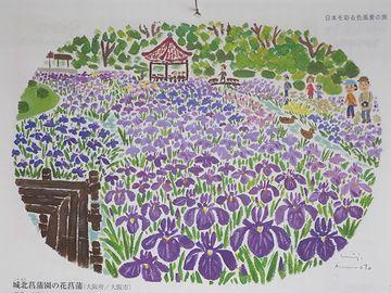 6月のイラストは、大阪市の『城北菖蒲園の花菖蒲』