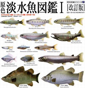 淡水魚だけの水族館って、無いもんですかね?