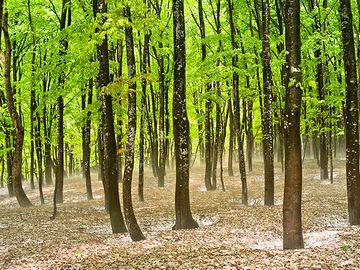『美人林』おとぎの森のようです。