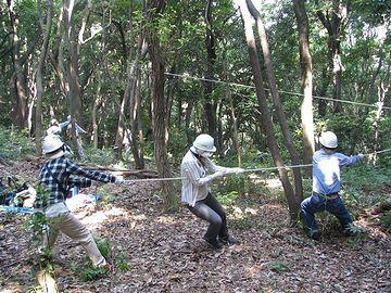 伐採作業で、木を倒す方向を調整してるのです
