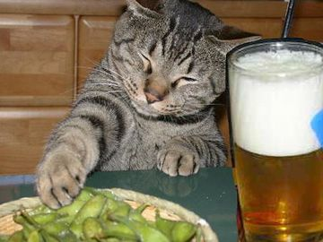 一杯、やるんじゃない?