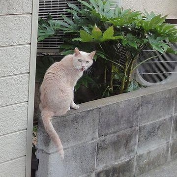 猫がいたので、パチリ