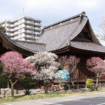 『蒲原神社』。梅の名所でもあります。