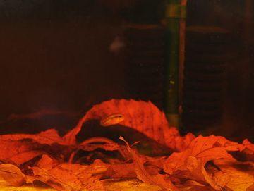 落ち葉を入れると、水が茶色くなる