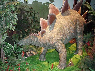 ステゴザウルスの背びれみたいに持ち上がってた