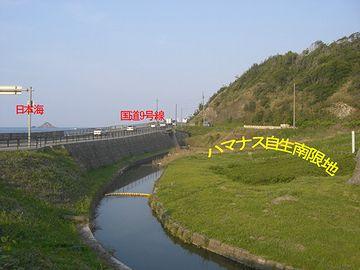なぜか鳥取の白兎海岸が南限地を名乗ってます。実際には、島根県大田市まで分布してるそうですが。