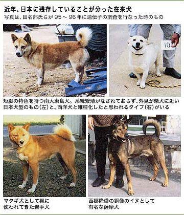 銅像が連れてる犬は、薩摩犬だそうです