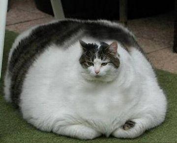 体が身重だろうが