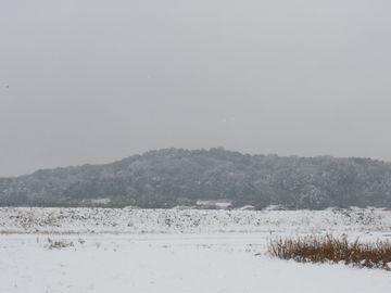天の香具山も、真っ白に雪化粧してしまった