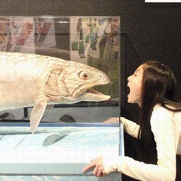 女の子は、劇場版『釣りキチ三平』のゆりっぺ役・土屋太鳳(たお)ちゃん