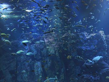 『男鹿水族館GAO』男鹿の海大水槽・2,000匹の魚が泳いでる