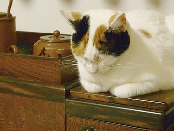 ここに猫が載って暖まってる