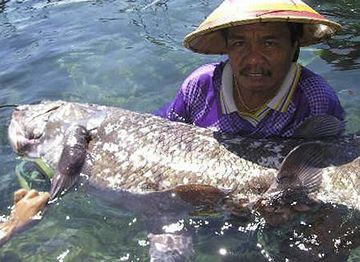 シーラカンス漁