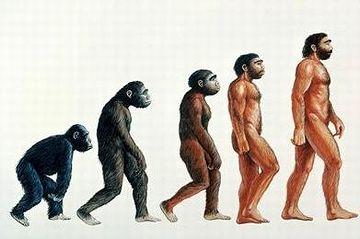大相撲を見てると、上半身毛だらけで、明らかに進化の途上にあると思われる力士がいます