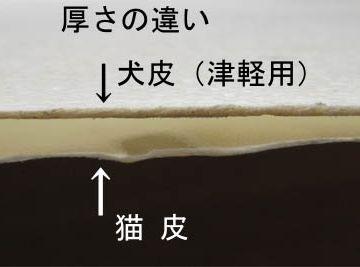 津軽三味線は、犬のようです。当然、猫より皮が厚くなります。