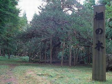 真山神社・榧の木の立て看板
