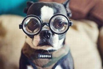 犬も近眼で、人間の視力で表すと、0.2~0.3程度だそうです