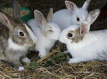 「やまなみ牧場」のウサギ