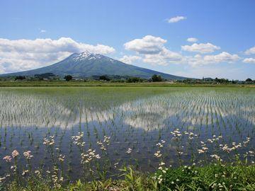 田んぼの向こうに岩木山。まさに、日本の風景ですね。