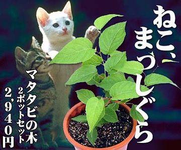 ネコが好きな?