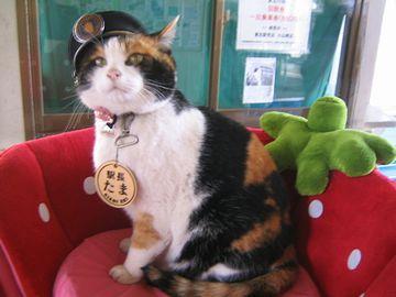 和歌山電鐵貴志川線『貴志駅』のたま駅長。残念ながら、2015年6月、帰らぬ猫に。