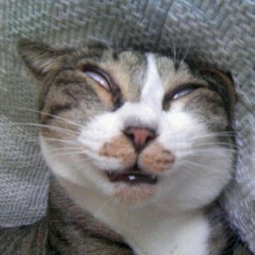 死に顔じゃありません。寝顔です。
