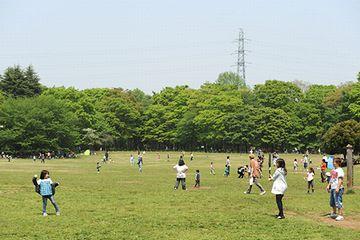 小金井公園の面積は、80万㎡